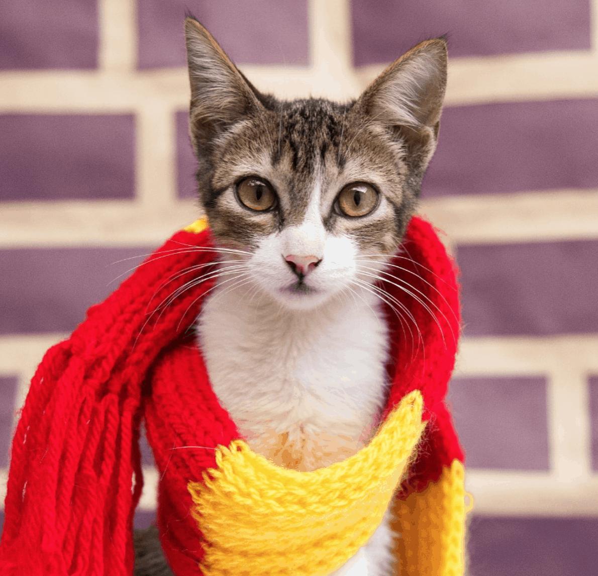 Abrigo em Belo Horizonte seleciona animais para casas de Hogwarts